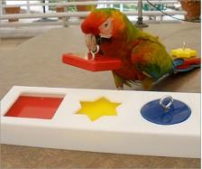 Parrot Puzzle