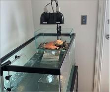 Turtle Acrylic Platform